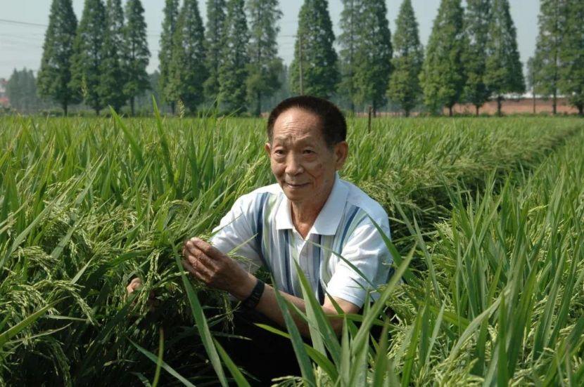 深切缅怀杂交水稻之父袁隆平先生